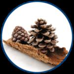 New Zealand Pine Bark (image)