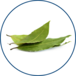 Guayusa Leaf Extract (image)